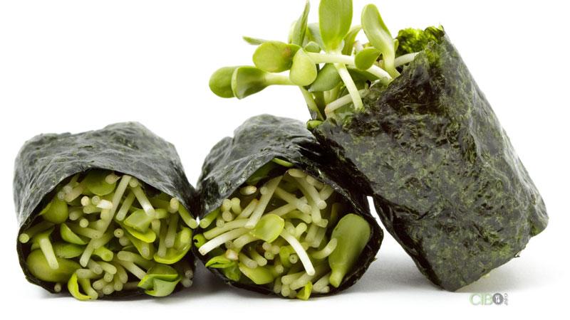 alghe e i loro benefici